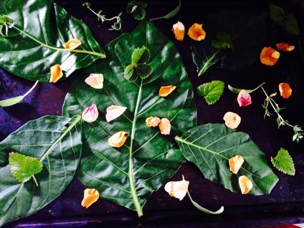 nonitea-roses